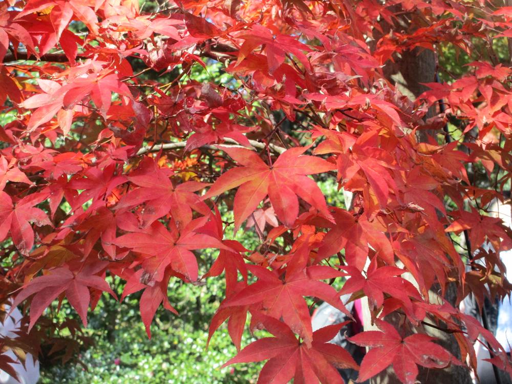 日本庭園5 のコピー.jpg