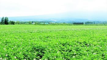 132 釧網本線・ジャガイモ畑に斜里岳見えず.jpg