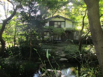 はけの森池 のコピー.jpg