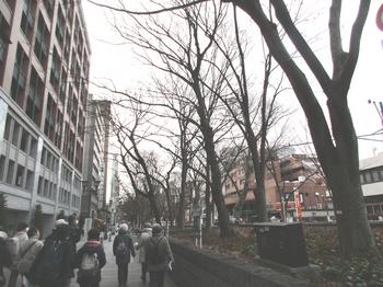 ケヤキ並木2 のコピー.jpg