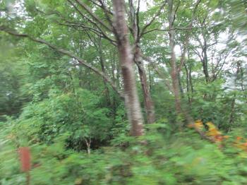 ブナの森.jpg