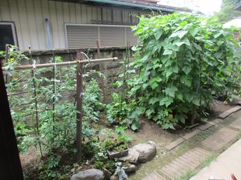 庭の畑2.jpg