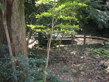 新次郎池 のコピー.jpg
