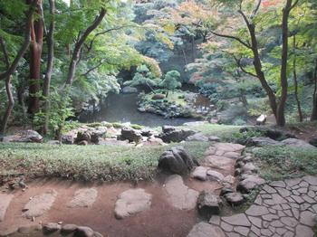 殿ケ谷戸庭園池2 のコピー.jpg