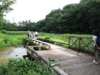 水生植物園6 のコピー.jpg