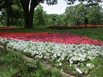渓流広場夏花壇 のコピー.jpg