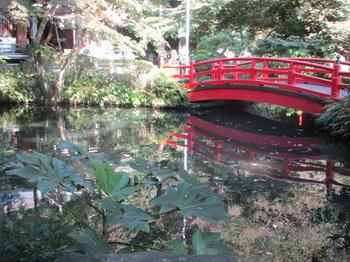 貫井神社池 のコピー.jpg