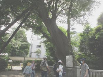 青謂神社2 のコピー.jpg